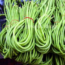 VEGETABLE - COWPEA - 60 seeds - Vigna sinensis - Black eyed peas