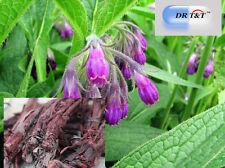Zi Cao (Radix Lithospermi)  100g dry herb Clear heat and cool blood