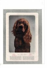 Vintage Photo Of Walida Red Brucie American Cocker Spaniel Dog Ad Print #C018