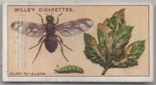 Celery Leaf Fly Insect Plant Pest 100+ Y/O Trade Ad Card