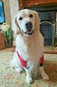 Dog elbow protectors ,padded SHORTS , calluses,pressure sores,hygromas,arthritis