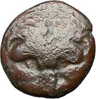 RHEGION Bruttium Italy 351BC Lion  Apollo Authentic Ancient Greek Coin i24843
