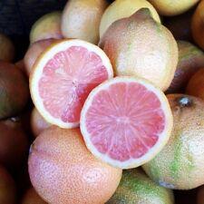 Rare seeds *Variegated  Pink Fleshed Eureka Lemon » 5 fresh seeds