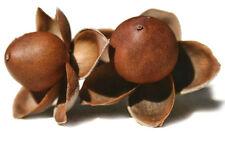 ROSA MADERA  hawaian woodrose argyreia 20 semilla seeds
