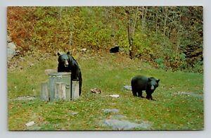 Postcard Vintage Black Bears Feeding Having Lunch Trash can Field