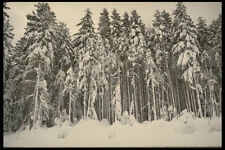216098 Mount Hood Forests Under Snow Along Barlow Road A4 Photo Print