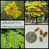 20+ YELLOW POINCIANA TREE SEEDS (Peltophorum pterocarpum) Bonsai Yellow Tropical