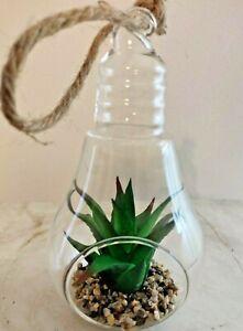 Walgreens Succulent Hanging Glass Bulb