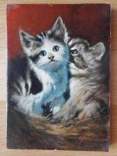 A. Höckel Katze Katzen Kätzchen Katzenjunge cat chat gatto cats chats gatti