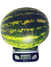 Digital Food Scale/Kitchen Scale/Postal Scale Weigh in Pounds Ounces Grams NEW