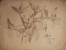 RAMO FOGLIE - LUIGI JUON - Disegno Originale a Matita 1907 Leaf Drawing