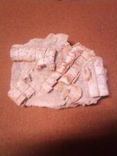 Extra Large Crinoid Fossils