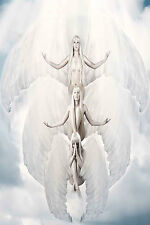 STUNNING HEAVENLY ANGEL WINGS CANVAS #628 QUALITY FRAMED PICTURE WALL ART