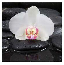 levandeo Glasbild 30x30cm Wandbild Glas Orchideen Blume Steine Wellness