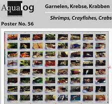 AQUALOG Poster Freshwater Shrimps, Crayfish and Crabs, LAMINATED