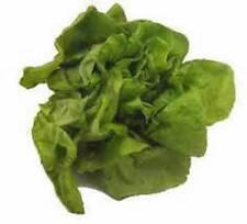 Lettuce Garden Collection, Heirloom, Organic Seeds, 4 Top Varieties