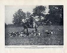 BASSET HOUND ORIGINAL VINTAGE DOG PRINT PAGE 1934 WOOTTON BASSET HOUND PACK