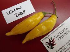Chili Lemon Drop - 5+ fresh seeds - FINE and RICH!