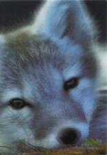 3 -D - Ansichtskarte: Polar - Fuchs - Arctic Fox - Alopex lagopus