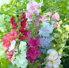 Summer Carnival Hollyhocks Seeds Usa Garden Flower Alcea Rosea Rose Seed 2020