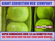 GIANT PEA SEEDS RUSSIAN XL SIZE PEA REACHES OVER 1.0 cm IN DIA'  + 30 SEEDS PEA