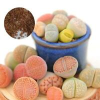 50pcs Mixed Lithops Seeds Living Stones Succulent Cactus 4Seasons Potted Plant