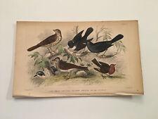 K9) Song Thrush Blackbird Redbreast Bird 58 Original 1855 Hand Colored Plate