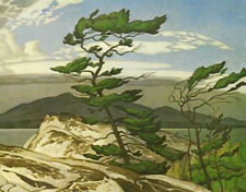 A.J. Casson- White Pine- Giclee Canvas Gallery Wrapped- 38 x 47