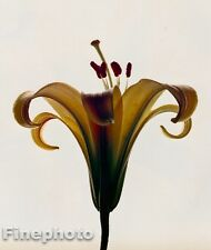1980 Vintage 11x14 FLOWER Botanical Fine Art LILY Photo Litho Plate IRVING PENN