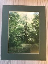 More details for who put bella in the wych elm?: wychbury ring , witchcraft vintage photograph