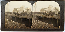 Keystone Stereoview of Unloading Sugar Beets in NEBRASKA from 1930's T600 Set NE