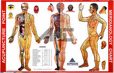 Acupuncture Meridianology (Acupuncture Point) Chart (Set of 3) + 5 Sujok Rings