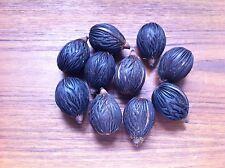 Foxtail Palm Seeds  10 SEEDS Wodyetia bifurcata 10 FRESH seeds