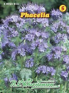 Phacelia Bienenfreund Bienenweide Gründünger Bienenfreund Wiese Blumensamen Saat