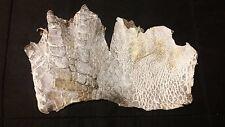 Genuine FL Alligator Skin natural color REAL gator hide alligator hide skin M75