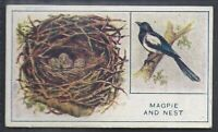 PHILLIPS-EGGS NESTS & BIRDS (UNNUMBERED)- THE MAGPIE