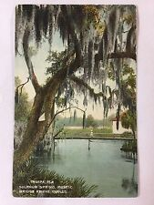Early 1900s Sulphur Spring, Rustic Bridge at the Outlet, Tampa, FL Postcard