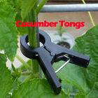 Korean Cucumber Tongs Support Clips Plant Stem Attracting+Cucumber Seeds 50pcs