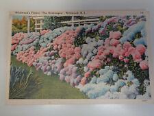 Wildwood's Flower – The Hydrangea, New Jersey 1940's Linen Postcard