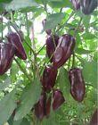 Hot Chili Pepper - JALAPENO PURPLE - 20 Heirloom Organic Vegetable Seeds