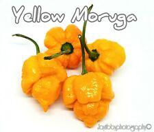 (25+) Moruga Scorpion Yellow Pepper Seeds