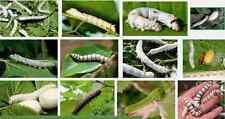 Silkworm  Silk & Silk Worms Culture Silk Weaving  E-Books on CD disc