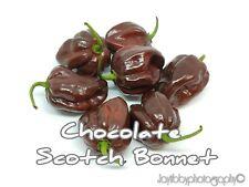 (25+) Chocolate Scotch Bonnet Pepper Seeds Hot