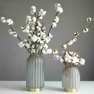 Natural Dried Cotton Plants 7 Heads Flowers Home Wedding Decor e Fak Party X6G5