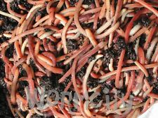 More details for worms 50g / 100g / 250 g / 500 g  / 1 kg composting compost tiger worms