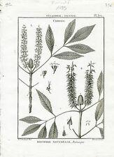 Redouté P.J Célèbre Peintre - Rare Gravure Originale de 1789 - Cunonia Pl 371