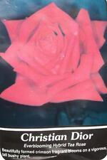 Christian Dior Crimson Rose 2 Year Live Bush Plants Shrub Plant Fine Roses