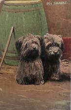 Skye Terriers Antique Postcard Rppc Postcard 1909