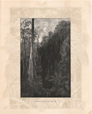 A Sassafras gully on the BLACK SPUR. Victoria, Australia 1888 old print
