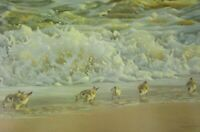 Vintage Art Robert Bateman Endangered Spaces Grizzly Bear Surf Sanderlings Beach